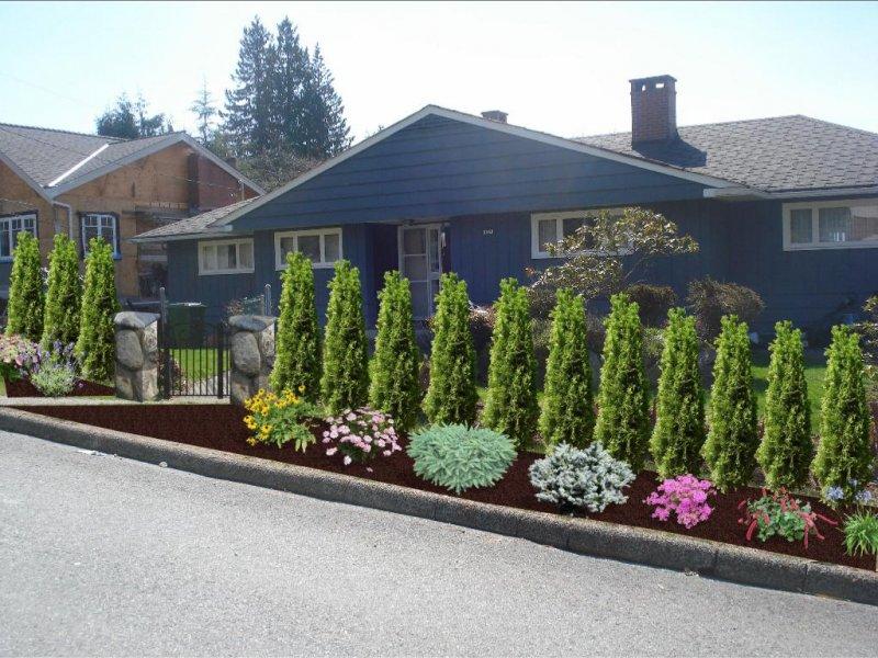 landscape design with hedge